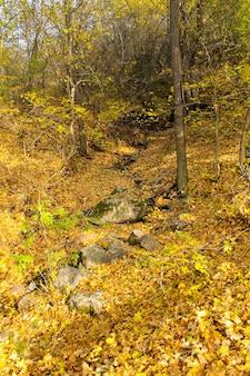 Strumień w jesiennym lesie