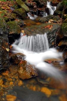 Strumień w parku przyrody gorbeia. kraj basków. hiszpania