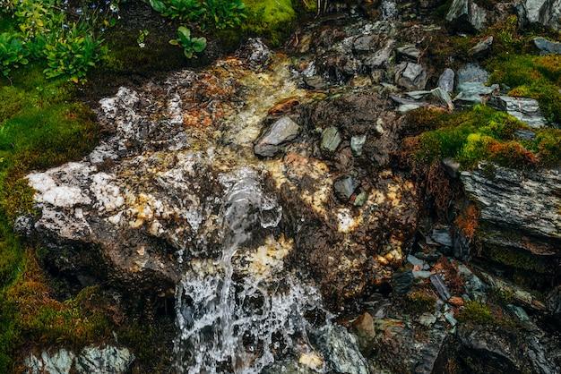 Strumień wody źródlanej wśród gęstego mchu i bujnej roślinności