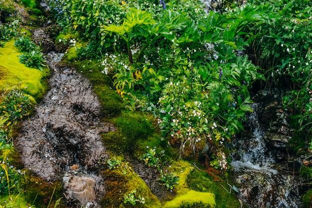 Strumień wody źródlanej wśród gęstego mchu i bujnej roślinności.