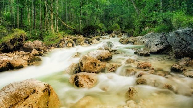 Strumień ze skałami w lesie