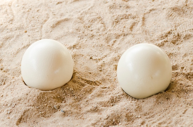 Strusie jaja na tle piasku