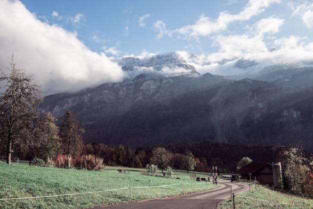Strzał krajobraz pól pełnych drzew z górami w szwajcarii
