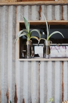 Strzał pionowy dwóch roślin w szklanych doniczkach pionowych