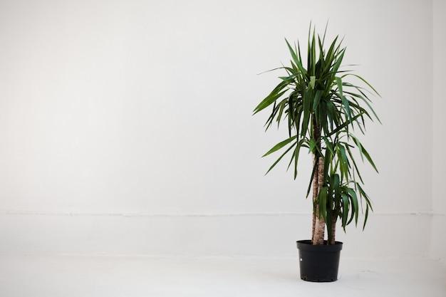 Strzał studio roślin doniczkowych.