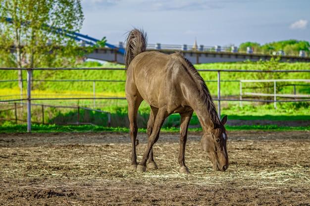 Strzał zbliżenie brązowy koń je trawy z zielenią w tle