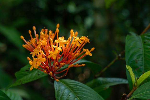 Strzał zbliżenie bukiet żółte kwiaty otoczone zielonymi liśćmi