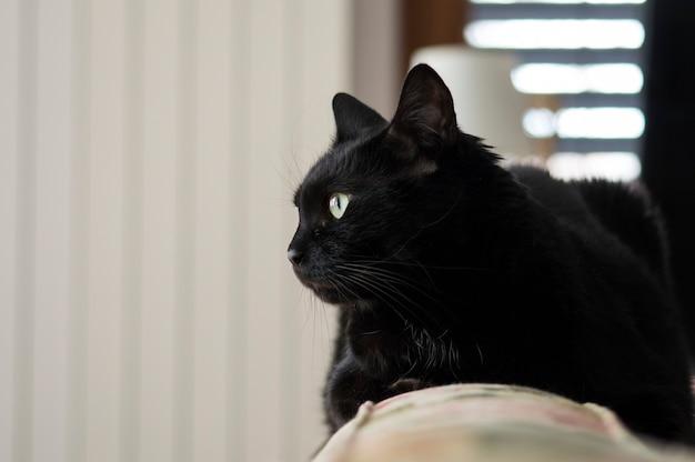 Strzał zbliżenie czarny kot w pokoju