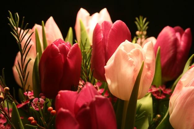 Strzał zbliżenie czerwonych i różowych tulipanów