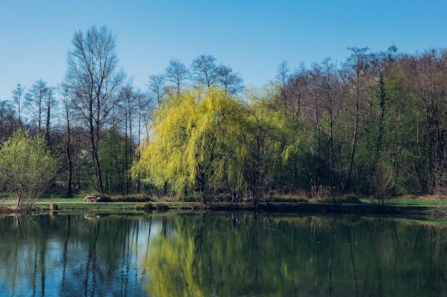 Strzał zbliżenie drzew i jeziora w parku maksimir w zagrzebiu w chorwacji wiosną