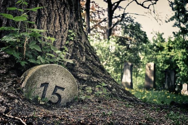 Strzał zbliżenie drzewa w pobliżu cmentarza
