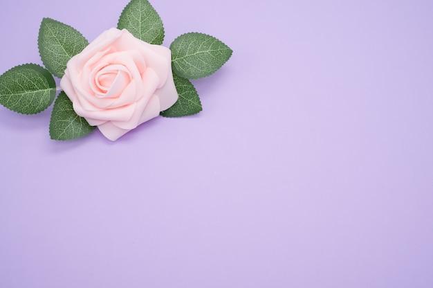 Strzał zbliżenie jednej różowej róży na białym tle na fioletowym tle z miejsca na kopię
