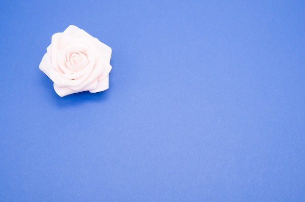 Strzał zbliżenie jednej różowej róży na białym tle na niebieskim tle z miejsca kopiowania