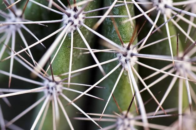 Strzał zbliżenie kaktusa z igłami w ciągu dnia