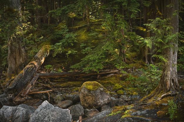 Strzał zbliżenie kamieni pokrytych mchem i drzewami w lesie waszyngtona