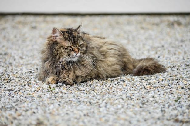 Strzał zbliżenie krajowego długowłosego kota leżącego na ziemi