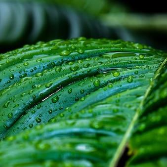 Strzał zbliżenie krople deszczu na liściach roślin zielonych
