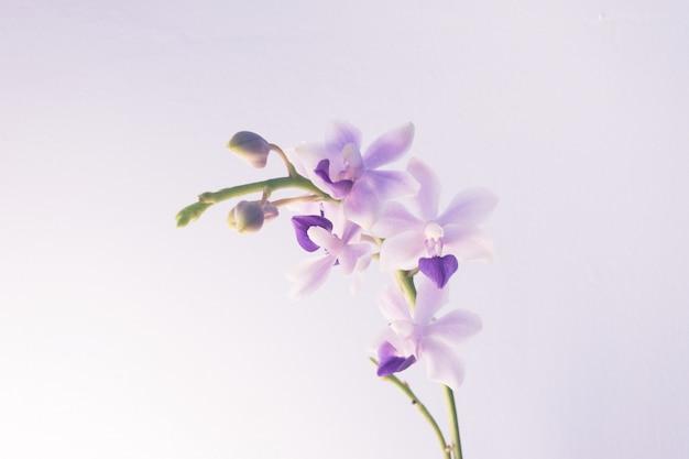 Strzał zbliżenie lekkiego fioletowego kwiatu