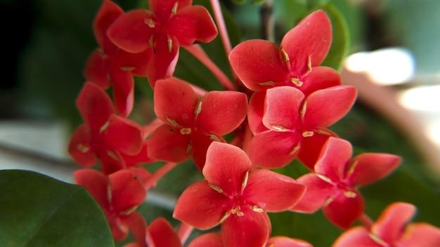 Strzał zbliżenie małych czerwonych kwiatów