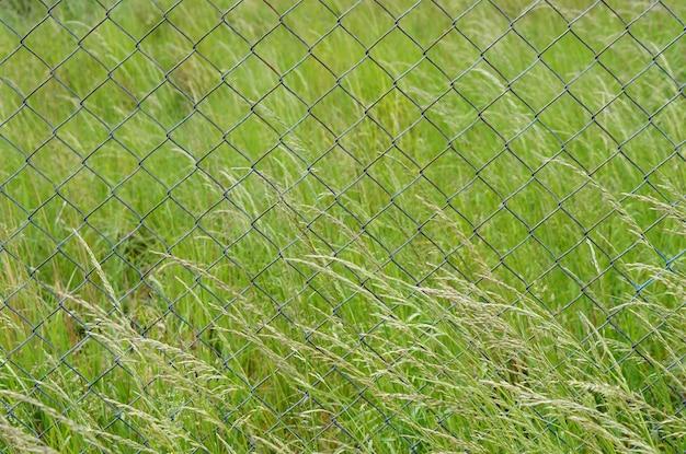Strzał zbliżenie metalowego ogrodzenia w polu pełnym zielonych traw