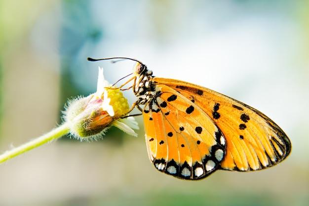 Strzał zbliżenie motyla na kwiat z rozmytym tłem