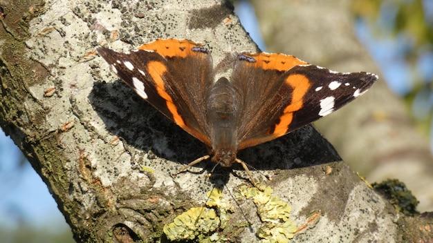 Strzał zbliżenie motyla siedzącego na gałęzi drzewa