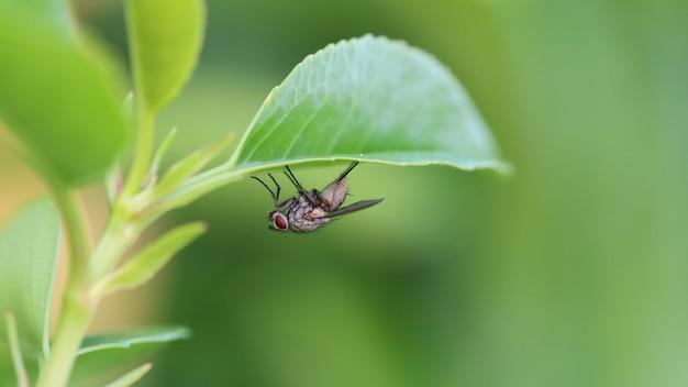 Strzał zbliżenie mucha na zielonych liściach