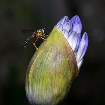 Strzał zbliżenie muchy siedzącej na kwiatku
