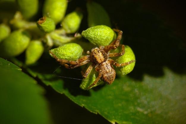 Strzał zbliżenie pająka na zielonych liściach rośliny