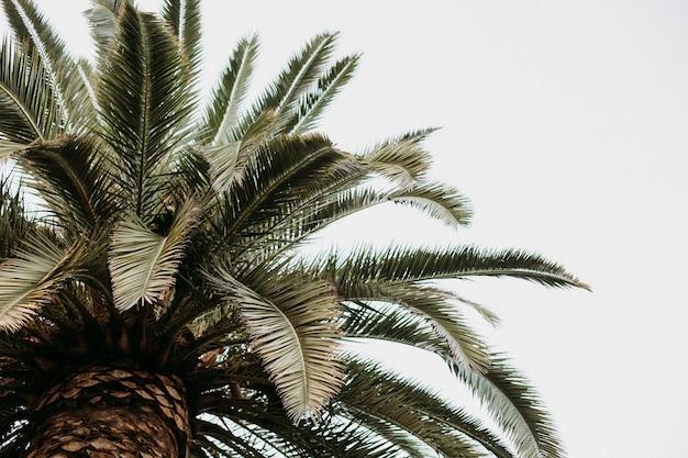 Strzał zbliżenie palmy na białym tle na tle pochmurnego nieba