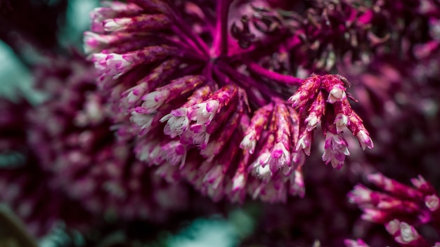 Strzał zbliżenie piękne fioletowe dzwonki na rozmazanej powierzchni