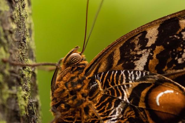 Strzał zbliżenie pięknego motyla na niewyraźne tło