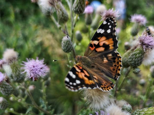Strzał zbliżenie pięknego motyla na roślinie