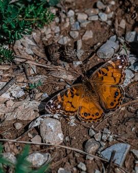 Strzał zbliżenie pięknego motyla na ziemi