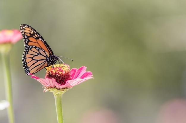 Strzał zbliżenie pięknego motyla siedzącego na kwiatku