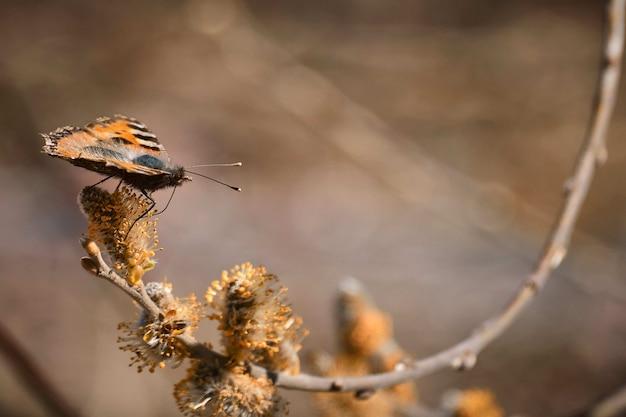 Strzał zbliżenie pięknego motyla siedzącego na pąku kwiatowym