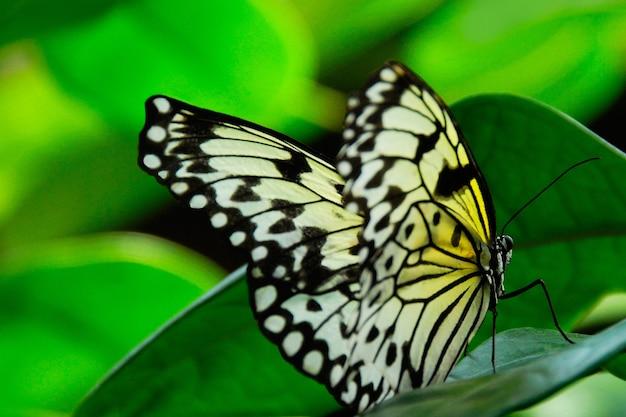 Strzał zbliżenie pięknego motyla siedzącego na zielonej roślinie