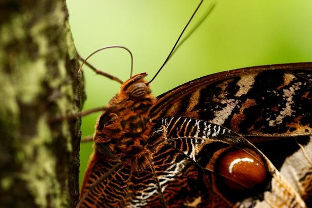 Strzał zbliżenie pięknego motyla