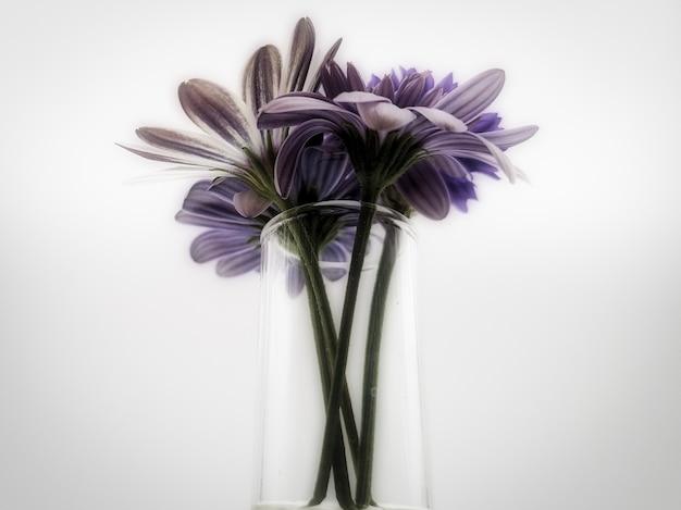 Strzał zbliżenie piękny bukiet kwiatów w szklanym wazonie na białym tle