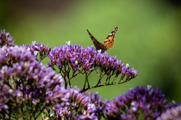 Strzał zbliżenie pomarańczowy i czarny motyl siedzi na kwiat niebieski i fioletowy