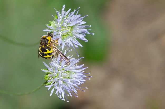 Strzał zbliżenie pszczoła na niebieski kwiat