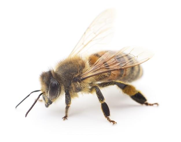 Strzał zbliżenie pszczoły na białym tle