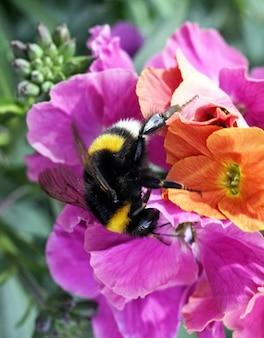 Strzał zbliżenie pszczoły siedzącej na kwiatku
