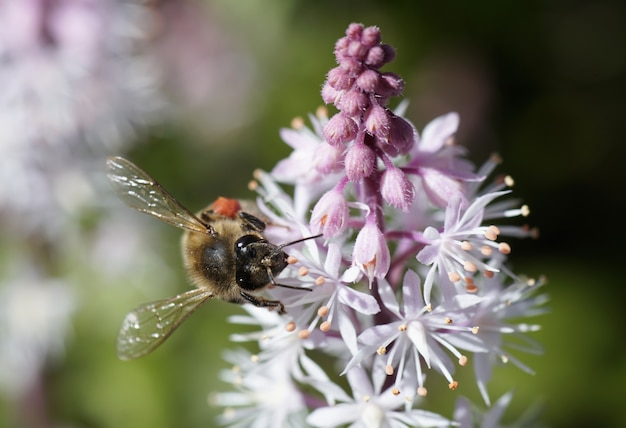 Strzał zbliżenie pszczoły siedzącej na piękny kwiat