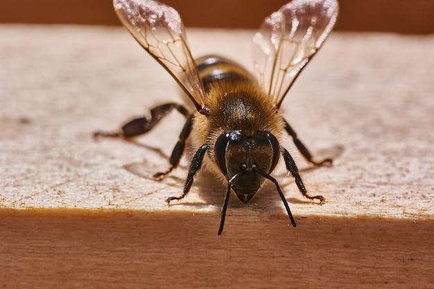 Strzał zbliżenie pszczoły w ulu