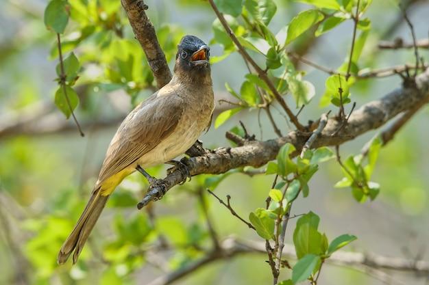 Strzał zbliżenie ptaka siedzącego na gałęzi drzewa - idealne dla tła