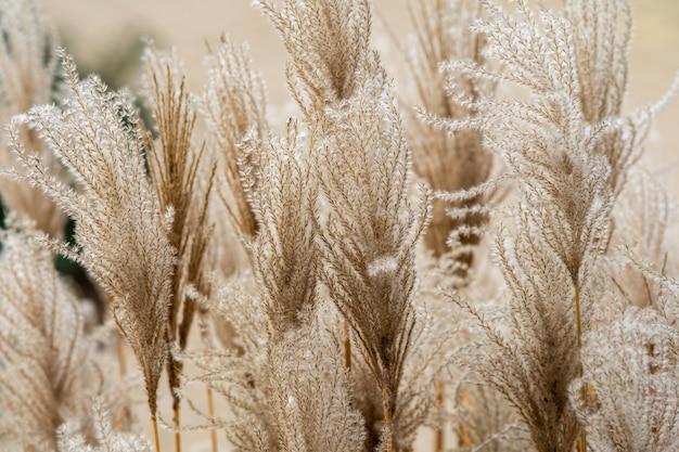Strzał Zbliżenie Rośliny Ozdobnej W Ogrodzie Premium Zdjęcia