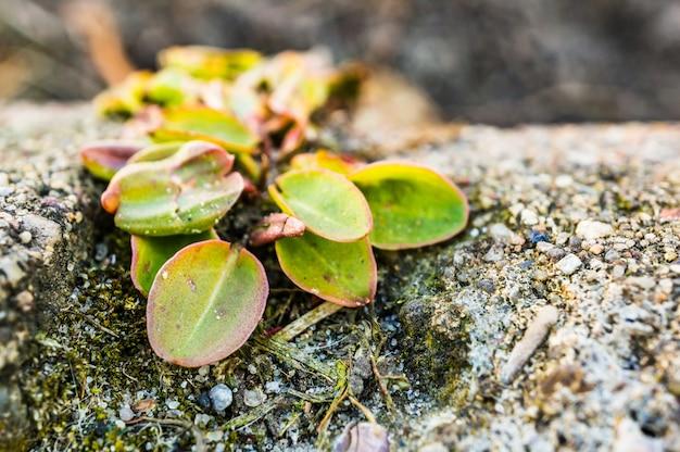 Strzał zbliżenie rośliny rosnące na ziemi