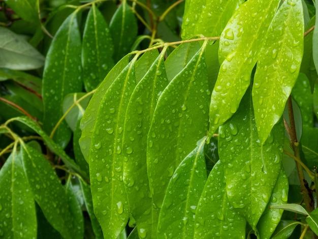Strzał zbliżenie rośliny z kroplami wody na jej długich liściach