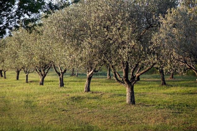 Strzał zbliżenie rosnących drzew w polu pod działaniem promieni słonecznych